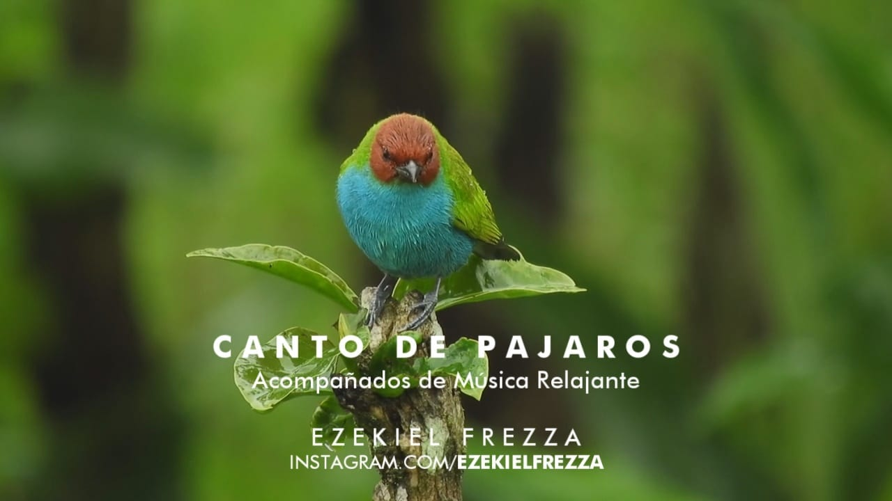 CANTO DE PÁJAROS Soothing Relaxing Nature Sounds Study Sleep Meditation ALPHA WAVES 2020